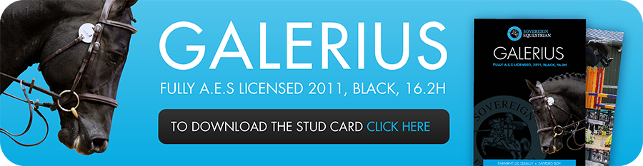 galerius_website_advert-01.png